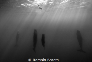 a lonely freediver and some spermwhale having a rest by Romain Barats